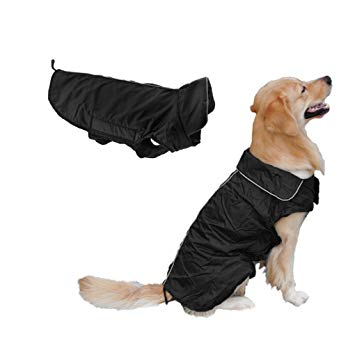 manteau chien hiver