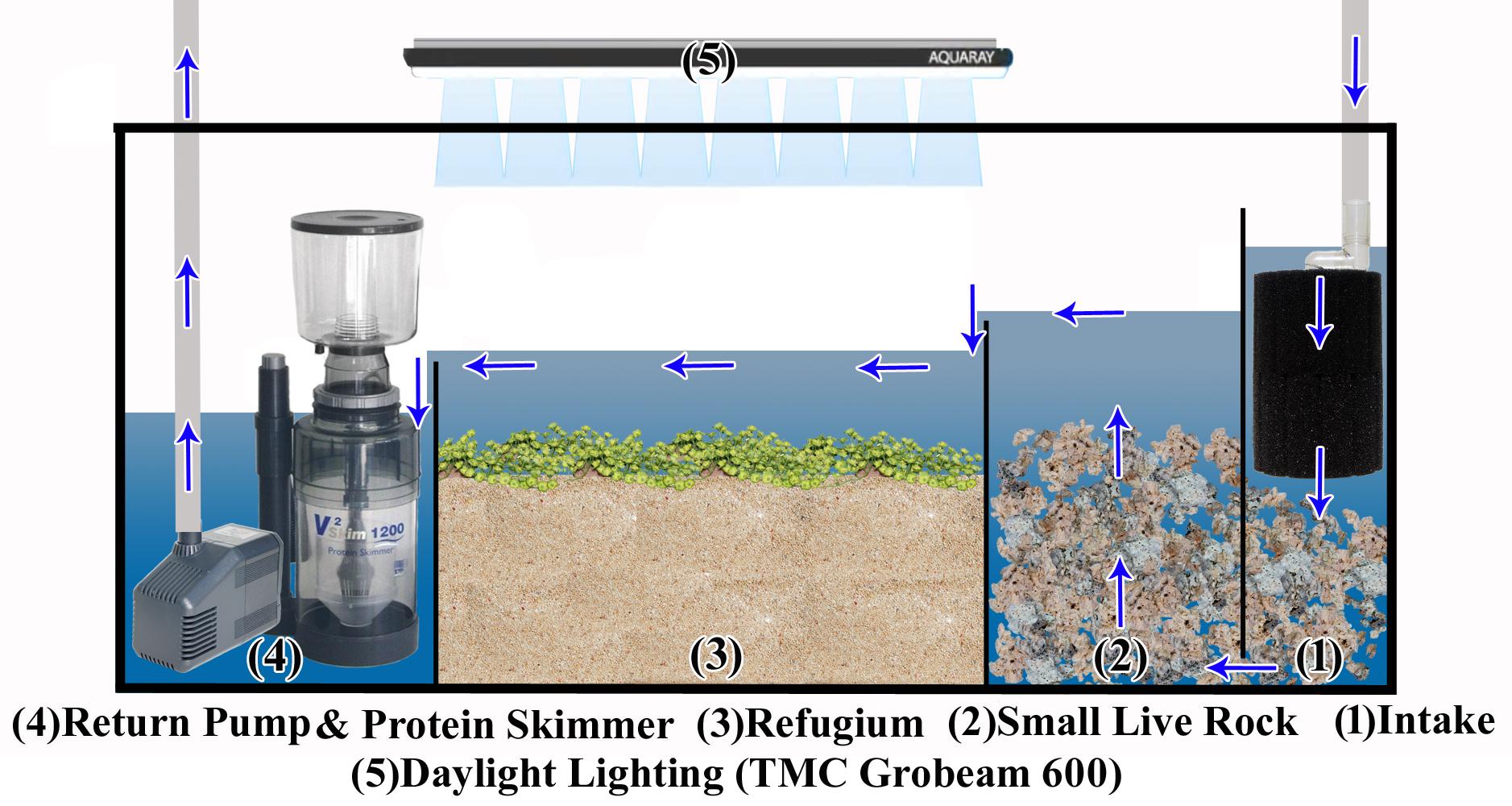 filtration aquarium