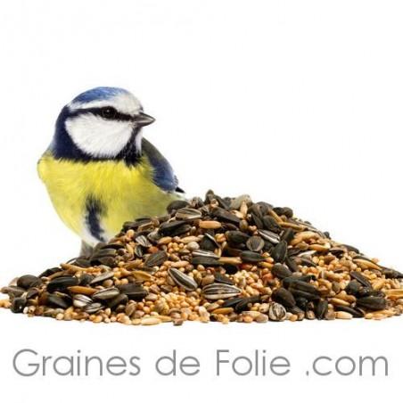 graines oiseaux