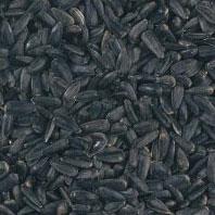 graines tournesol oiseaux