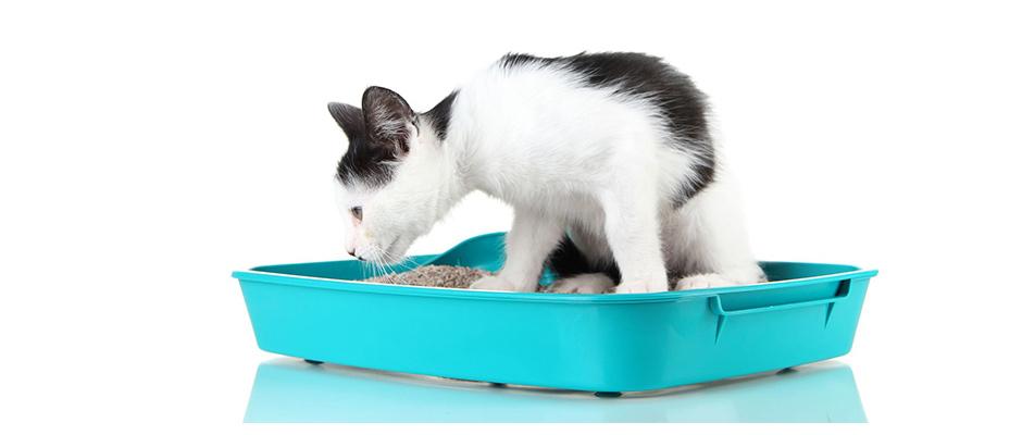 litiere chaton