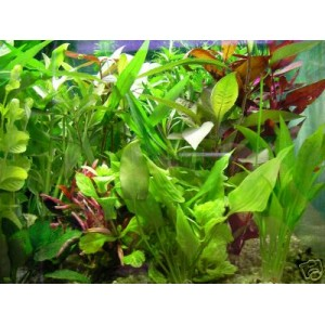 lot plante aquarium