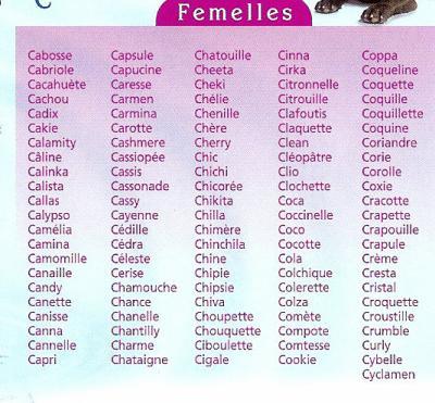 prénom chat femelle